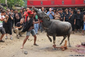 cow-sacrifice