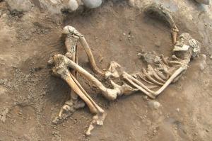 00s-skeleton